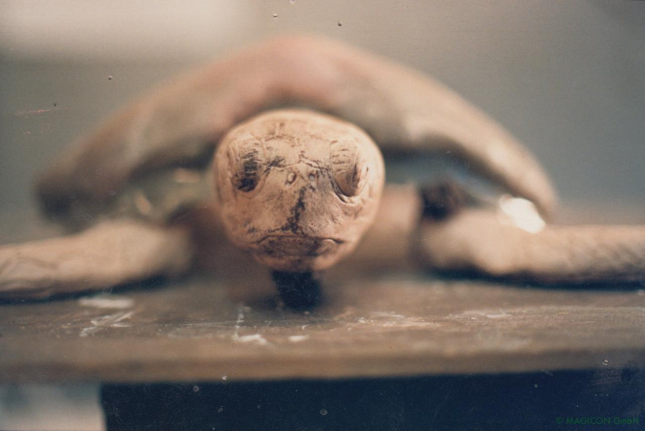 Schildkröte 02